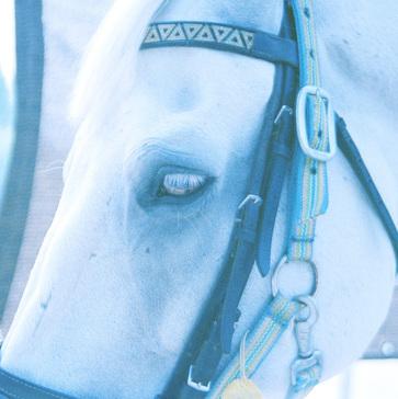 Blue Horse e.p.